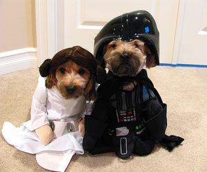 dog, star wars, and lol image