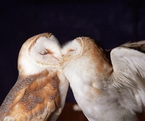 owls and love image