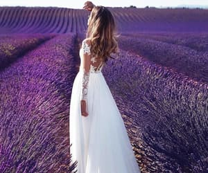 france, lavender, and photography image