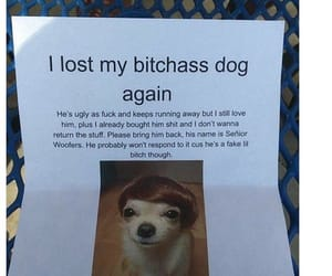 dogs, funny, and tweets image