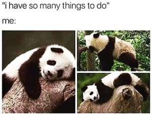 funny, panda, and animal image