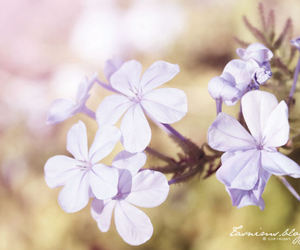 Dream, flower, and purple image