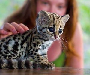 baby, cutie, and kitten image