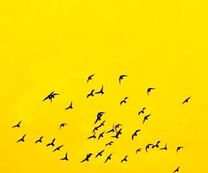 yellow and birds image