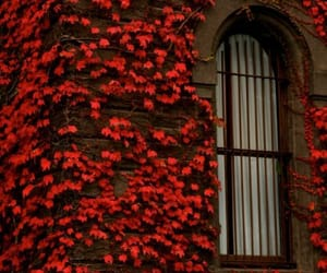 red, flowers, and window image