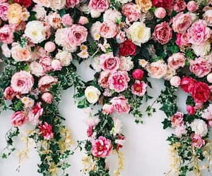 aesthetic, pink rose, and rose image