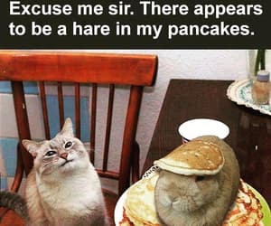 cat, funny, and rabbit image