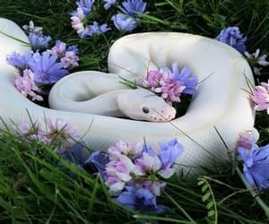 snake, animal, and flowers image