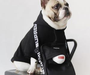 french bulldog, supreme, and cute pretty image