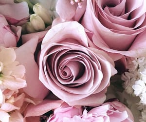 flowers, pink flowers, and pretty image