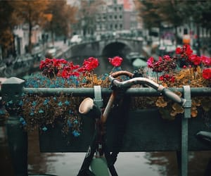 bicicleta, flowers, and bycicle image