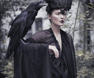 black, crow, and raven image