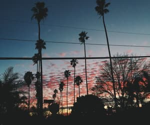 sky and palm trees image