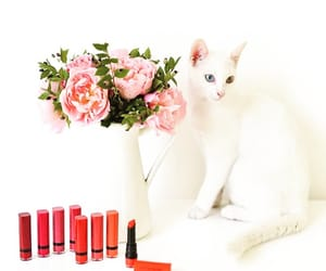 beauty, cat, and bourjois image