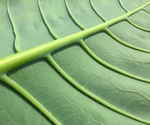 green, leaf, and nature image