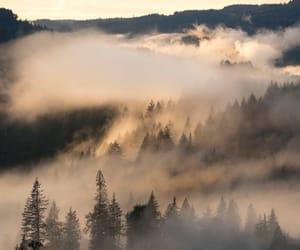 beautiful, light, and nature image