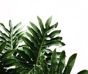 green, light, and plants image