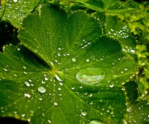 green, photography, and raindrops image