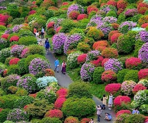 japan, travel, and flower field image