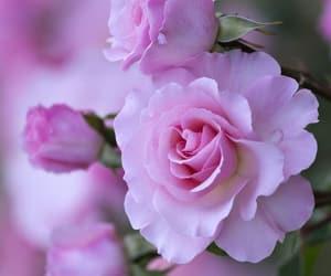 belleza, naturaleza, and flor image