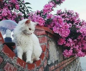 cats, flower, and white image