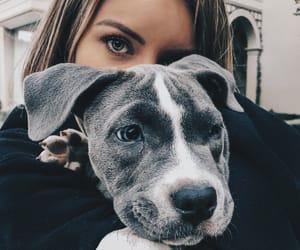 animal, brunette, and dog image