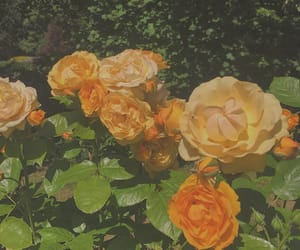 aesthetic, calm, and flowers image