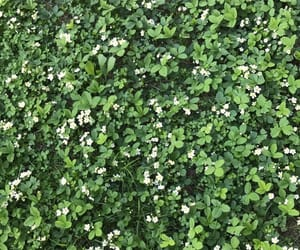 clover, nature, and flowers image