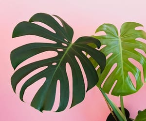 green, pink, and plant image