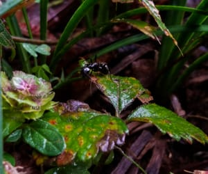 ants, leaves, and life image