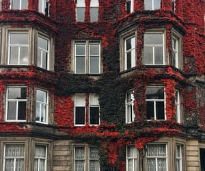 architecture, flowers, and red image