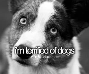 dogs, tumblr, and that's who i am image