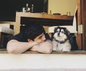 dogs, tumblr, and calum hood image