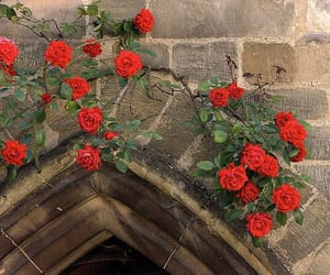 ancient, door, and roses image