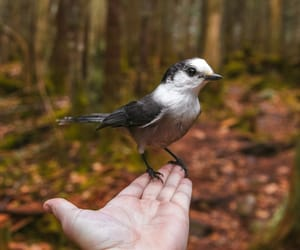 bird, hand, and trees image