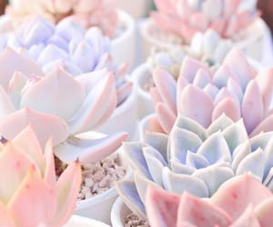 succulent, pastel, and plants image