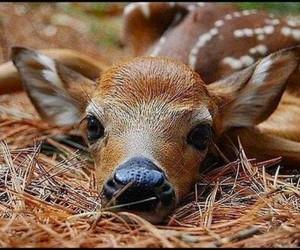 bambi and cute image