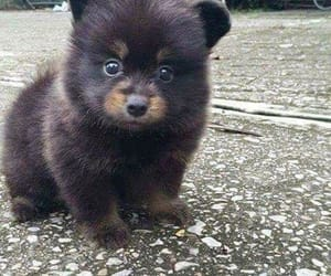 adorable, cute dogs, and dog image