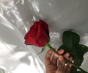 flower, red rose, and red roses image