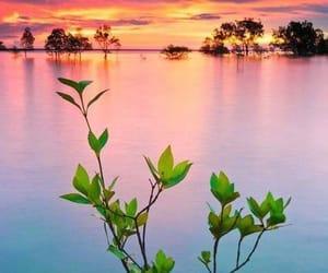 australia, nature, and water image