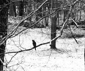 black & white, nature, and upstate image