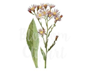 floral print, purple flower, and digital download image
