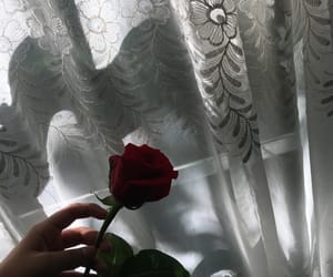 rosa, roses, and shadow image