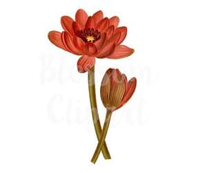 etsy, flower illustration, and vintage flower image