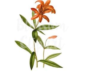 etsy, vintage flower, and vintage clip art image