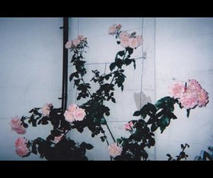 artist, roses, and arla aabba image