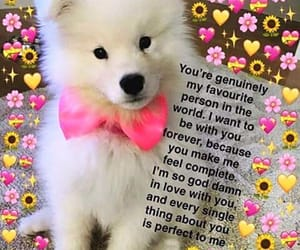 dog, soft memes, and cute image