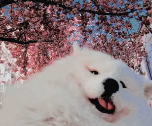 aesthetic, dog, and kpop icons image