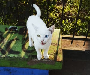 blue eyes, green eyes, and meow image