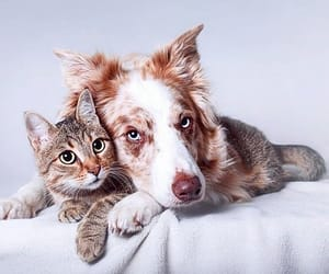 adorable, adventure, and animal image